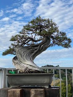 Bonsai Tree Types, Plantas Bonsai, Bonsai Styles, Bonsai Art, Diy And Crafts, Trees, Gardening, Mini, Amazing