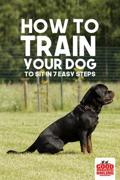 How To Train Your Dog To Sit In 7 Easy Steps Training Your Dog
