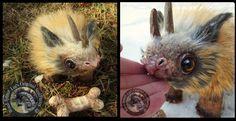SOLD Handmade Poseable Baby Kork! by Wood-Splitter-Lee.deviantart.com on @DeviantArt