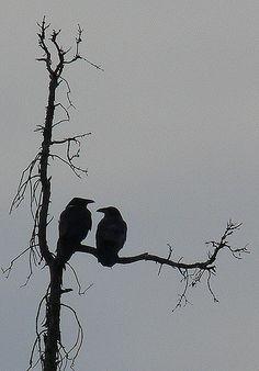 Raven Negative Space | Ravens look best in silhouette. | Corbeau du Nord | Flickr