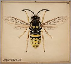 Love the style, but want a native bee