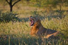 4-Day Kruger Park Tour from Johannesburg