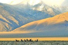 big lost river valley with elk