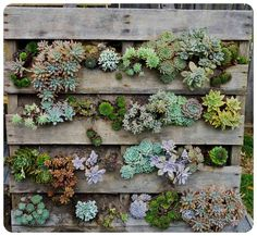 succulent wall hanging palates gardneista - Google Search