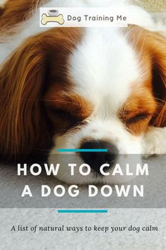 How to calm a dog down. Learn why it is important to keep your dog calm and find out some signs that your dog is feeling fear, stress, or anxiety. Click through for our list of natural ways to keep your dog calm. #howtocalmadogdown #keepdogcalm #calmdogs #calmyourdog #doghealth