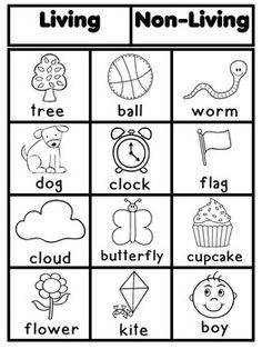 math worksheet : living and non living things pdf  the connected teacher  : Living Things Worksheet For Kindergarten