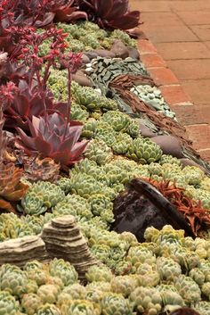 succulent garden - by the driveway, under the flag near the tree Succulent Landscaping, Succulent Gardening, Landscaping Tips, Garden Landscaping, Growing Succulents, Cacti And Succulents, Water Plants, Cool Plants, Low Maintenance Garden