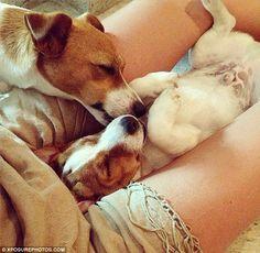 Candice Swanepoel's dog Luna kisses her pup xx