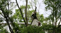 Indiana Tree Trimming will handle all your local tree service needs.