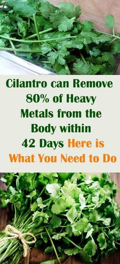 Cilantro can Remove 80 of Heavy Metals from the Body within 42 Days Here is What You Need to Do Something Logical Heavy Metal Poisoning, Natural Body Detox, Heavy Metal Detox, Body Detox Cleanse, Digestive Cleanse, Full Body Detox, Wheat Grass, Sugar Detox, Weight Loss Drinks