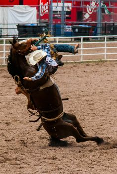 BROKEBACK MOUNTAIN.  Saddle Bronc Riding - Cheyenne Frontier Days - Cheyenne, Wyoming.