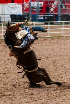 BROKEBACK MOUNTAIN.  Saddle Bronc Riding - Cheyenne Frontier Days - Cheyenne, Wyoming.