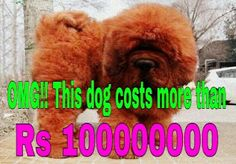 Scroll A2Z: List of world's expensive dogs