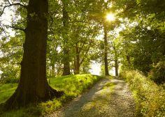 """""""C'è un rimedio allo stress e al burnout: la natura. Ma la stiamo dimenticando"""""""