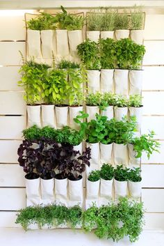 A hanging canvas shoe organizer repurposed into a vertical herb garden…