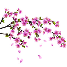 japanese cherry blossom art - Google Search