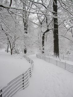 Snow storm (Central Park, NYC) by redwingx