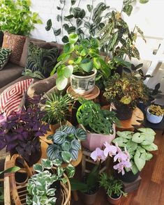 All the trendy, interesting house plants packed in to one room.