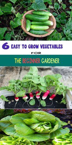 6 EASY TO GROW VEGETABLES FOR THE BEGINNER GARDENER