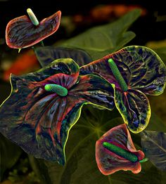✯ Red Anthurium with Koi