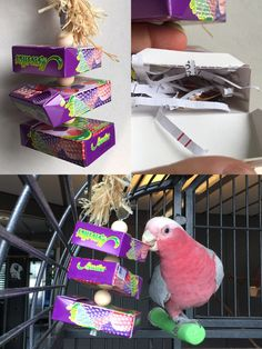 Creative reuse of candy boxes to make parrot foraging toys