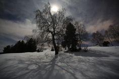 Pianta con luna piena e ombra foto di Fabrizio Servalli