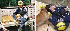 Last Living 9/11 Rescue Dog Honored With Epic Sweet 16 Birthday Party | Bored Panda