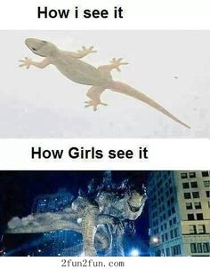 Okay I'm a girl and personally I love reptiles and I don't freak out about them but this Is pretty funny!!