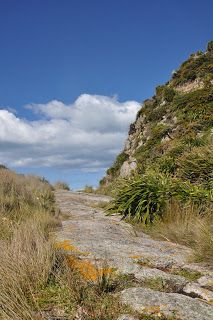South Island, New Zealand, Country Roads, Water, Outdoor, Plants, Nice Asses, Gripe Water, Outdoors