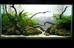 Aquascaping style Aquascaping categories--my own take on it. AquaScaping World Forum Aquascaping, Aquarium Aquascape, Planted Aquarium, Aquarium Garden, Aquarium Landscape, Nano Aquarium, Nature Aquarium, Vivarium, Paludarium