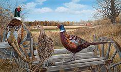 Bird Eye View-Pheasants by Larry Beckstein