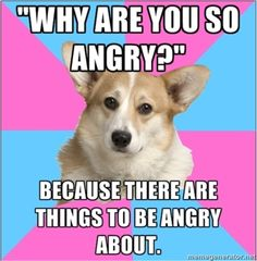 Critical feminist corgi is the best thing.