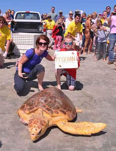 rehabilitated sea turtle being released back into the ocean!