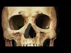 Your Skull Gone From The Memory by Mandela Effect - YouTube