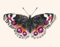 An over-sized butterfly in bold feminine colors makes this print a unique accent for your home.