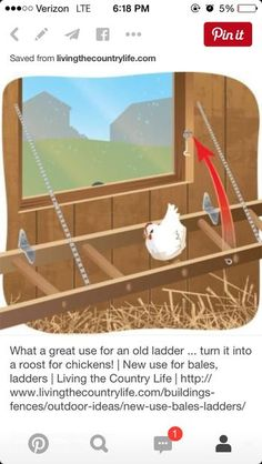 Turn an old ladder into a roost for chickens! Have ladder use it on new coop Chicken Coup, Chicken Pen, Chicken Coop Plans, A Frame Chicken Coop, Keeping Chickens, Raising Chickens, Backyard Farming, Chickens Backyard, Chicken Roost