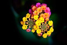 Welcome August #flowers #flowerporn #flowerlover #flowerpop #flowery #flowergram #flowermagic #flowerlove #august Welcome August, August Flowers, Pop, Instagram Posts, Plants, Photos, Popular, Pictures, Pop Music