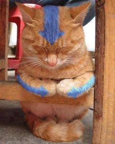 Avatar cat XD