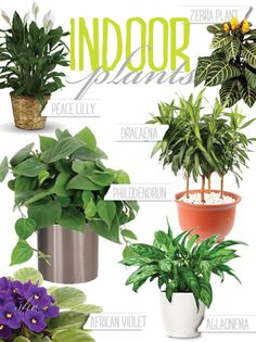 Indoor plants and how to take care of them