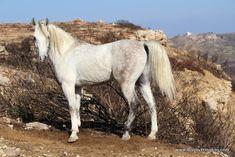 Greece, Horses, Animals, Greece Country, Animales, Animaux, Horse, Animal Memes, Animal