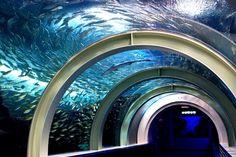 Aomori, Asamushi Aquarium