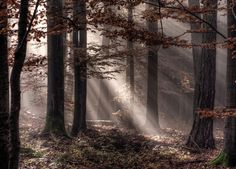 Photograph Autumn Morning II by stefan9 on 500px
