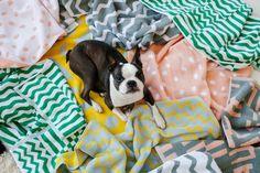 Beautiful geometric patterns underneath a cute French Bulldog