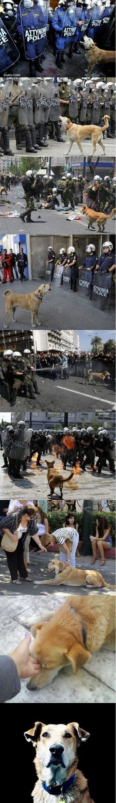 Just Loukanikos - The Riot Dog