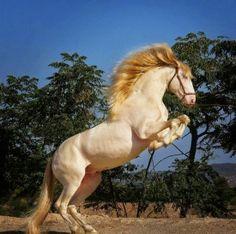 cavallo+horse