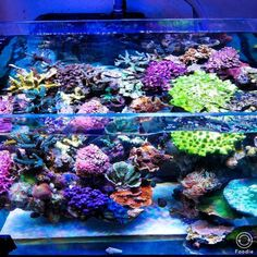 Is growth in your reef limited by trace element consumption? This reefer is doing an experiment to test this theory... Click the link to follow along: https://www.reef2reef.com/threads/experiment-trace-element-limitation-in-reef-tank.380859/