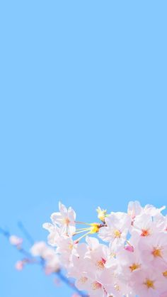 Wallpaper iphone floral cherry blossoms ideas for 2019 Spring Flowers Wallpaper, Flower Phone Wallpaper, Cellphone Wallpaper, Flower Background Wallpaper, Tumblr Wallpaper, Trendy Wallpaper, Wallpaper Backgrounds, Phone Wallpapers, Aesthetic Iphone Wallpaper