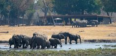 "Timely article from We Are Africa: Wilderness Wildlife Trust Uses Tourism To Protect Zimbabwe's Wildlife. ""Conservationists are hoping that a spike in overseas visitors to Zimbabwe's two biggest game-viewing destinations: Hwange National Park and Mana Pools National Park, both of which are a short plane hop away from the airport. This is because, somewhat conversely, a thriving tourism industry is by far the best chance the wild animals of Zimbabwe have of surviving."" Zimbabwe Africa, Family Tent, Tourism Industry, Travel And Leisure, Camps, Tent Camping, Lodges, Wilderness"