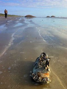 About 14 detached feet (in sport shoes) were found mysteriously on the shores between British Columbia and Washington in The case is still ongoing. Paranormal, Scary, Creepy, Urban Legends, Weird World, Macabre, Cryptozoology, Mystery, At Least
