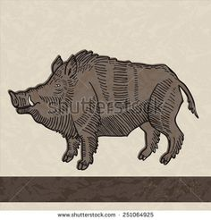 Boar Illustrations de stock et bandes dessinées | Shutterstock